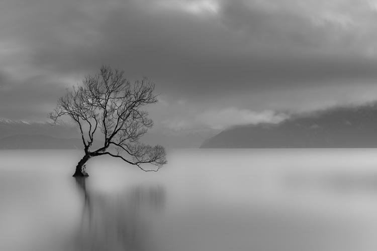 Lone tree, Lake wanaka, New Zealand (black and white)