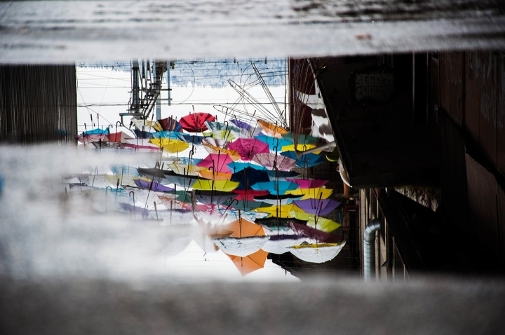 Umbrellas in puddle