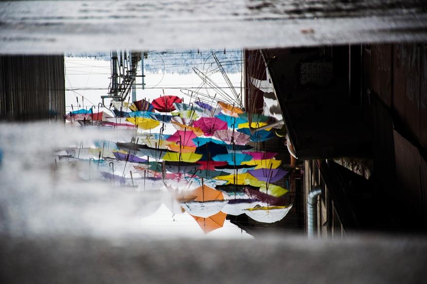 Umbrellas in puddle