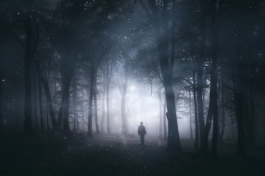 magical forest, mystery landscape with man silhouette in dark wo