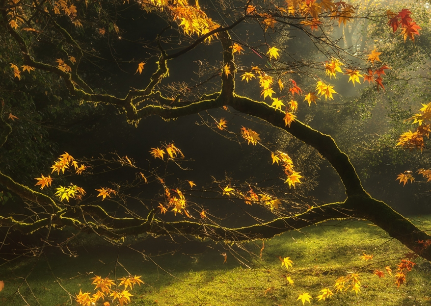 Beautiful golden Autumn leaves with bright backlighting from sun