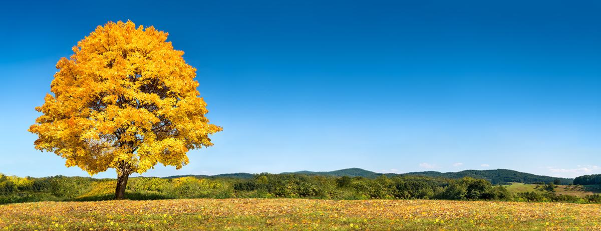 Einsamer Baum im Herbst als Hintergrund