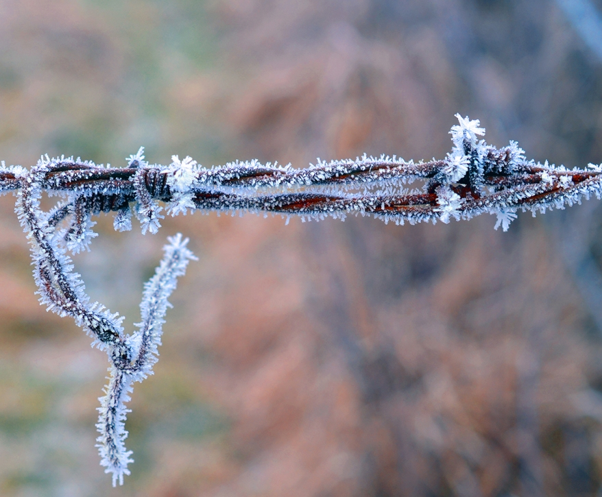 Close Up View of barbwire covered in frost, Bavaria, Germany