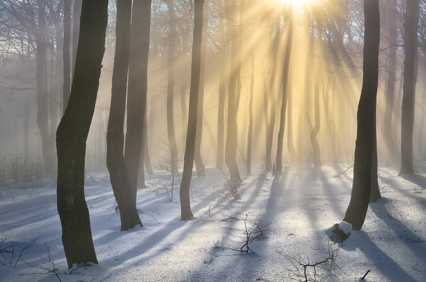 Winter forest with beautiful orange rays - scenery from snowy ev