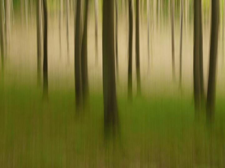 Bewegter Wald