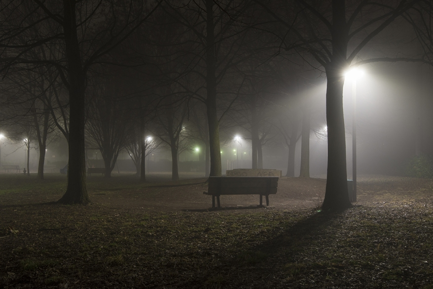 bench in the middle of the park between plants and fog