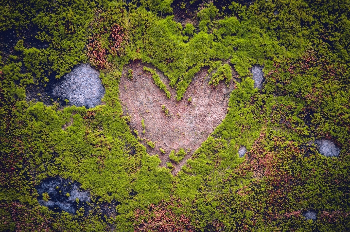 heart shape sign engraved in the moss