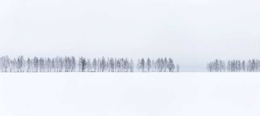 A row of trees against a white snow and white sky background