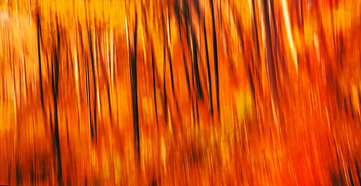 Abstract image of blurred trees in an autumn forest. Intentional motion blur
