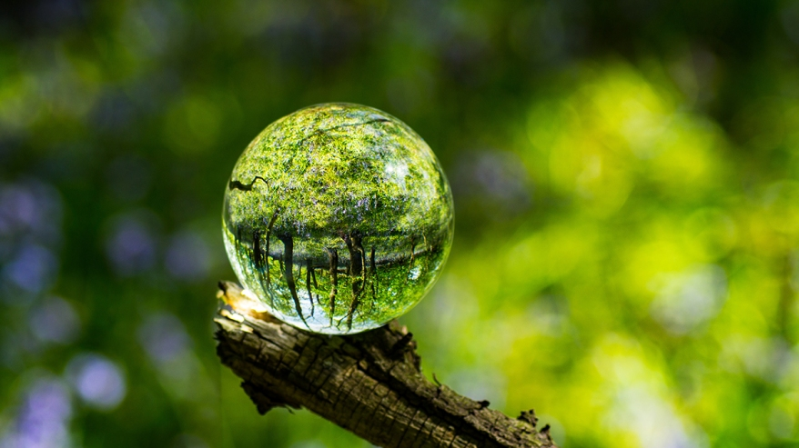 Photo Sphere Crystal Ball Magnifying and Reflecting woodland cou