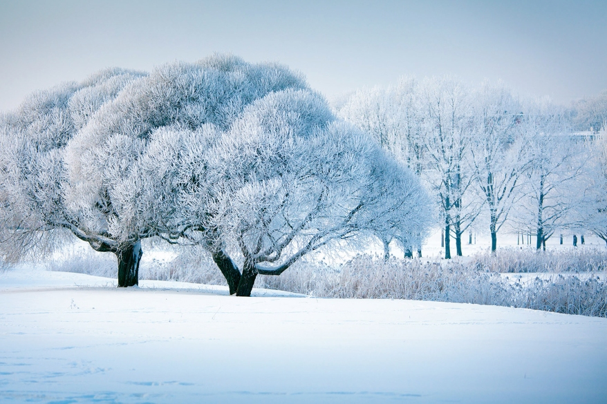 Frozen winter trees in Latvia, christmas time